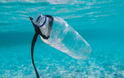 PLASTIC IS A DISASTER – ENDING THE USE OF HARMFUL AND UNNECESSARY SINGLE-USE PLASTICS