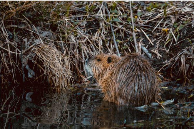 'Boil water to avoid beaver fever' township residents told